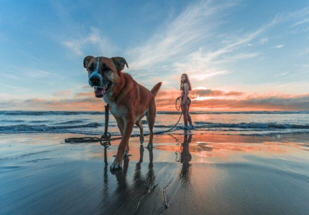 Husk hundeforsikringen på rejsen - Find den billigste