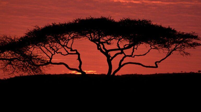Din romantiske luksusrejse til Sydafrika